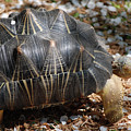 Desert Turtle With An Unusual Shell In The Wild by DejaVu Designs