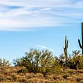 Desert View by Brigitte Mueller