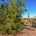 Desert View by Edward Peterson