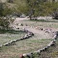 Desert Walking Trail  by Christy Pooschke
