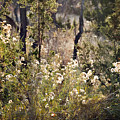 Desert Weeds by Ray Laskowitz - Printscapes