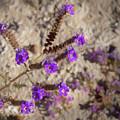 Desert Zig Zag Purple Flower by Penny Lisowski