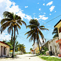 Deserted Mexican Village Road With Coconut by Susan Vineyard