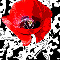 Design Poppy by Martine Affre Eisenlohr