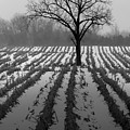 Desolate by Kristin Yata