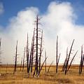 Desolation by Richard Rizzo