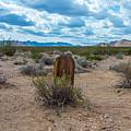 Desolation by Stephen Whalen