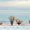 Desperate Trees by Todd Klassy