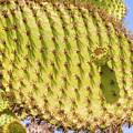 Detail Of Cactus In Galapagos by Marek Poplawski