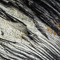 Detail Of Dry Broken Wood by Jozef Jankola
