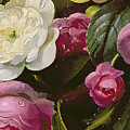 Detail Of Full Blown Roses by Albert Williams