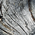 Detail Of Old Weathered Wood by Jozef Jankola