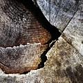 Detail Old Sawn Stump by Jozef Jankola