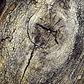 Detail Stumps On Old Wood by Jozef Jankola