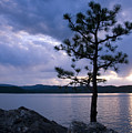 Determination by Idaho Scenic Images Linda Lantzy