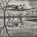Detritus by Jim Cook