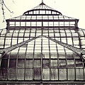 Detroit Belle Isle Conservatory by Alanna Pfeffer