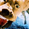 Devil Dog Underwater by Jill Reger