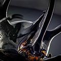 Devil Horns Macro by Robert Storost