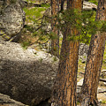Devils Tower Trees by Chad Davis