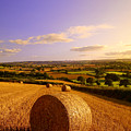 Devon Haybales by Neil Buchan-Grant