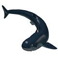 Devonian Cladoselache Shark by Corey Ford