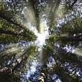 Devoto Grove by Leland D Howard