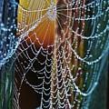 Dew Covered Web by Julie Adair