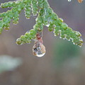 Dew Drop by Peggy King