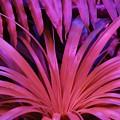 Dew Drop Pink by Florene Welebny