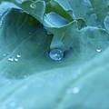 Dew Drop by Robert Gebbie