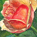 Dew Drop Rose by Robert Thomaston