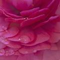 Dew Drops Macro by M Valeriano