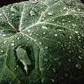 Dew Drops by Michael Gailey