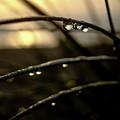 Dew Drops by MotionOne Studios