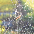 Dew Drops On A Spider Web by Kent Lorentzen