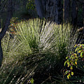 Dew On A Grass Tree by Tony Brown