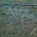 Dew On The Web by Douglas Barnett