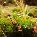 Dewdrop Fairyland by Gemma Fox
