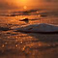 Dewees Island Sunrise by Jo Marie Brown