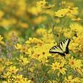 Dewey Creek 1010 Eastern Tiger Swallowtail by Captain Debbie Ritter
