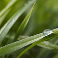Dewy Drop On The Grass by Michal Boubin