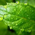 Dewy Mint by Bri Lou