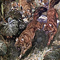 Dhole, Endangered Species by Biodiversity Heritage Library