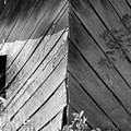 Diagonals by Curtis J Neeley Jr