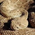 Diamondback Rattlesnake Close-up 062414a by Edward Dobosh