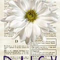 Dictionary Daisy by Diane LaPreta