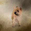 Did I Hear You Say Walk - Cairn Terrier by Jai Johnson
