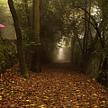 Diferent Paths by Jorge Maia