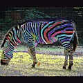 Differt Stripes For Different Types by David Carter